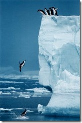 iceberg_endusers
